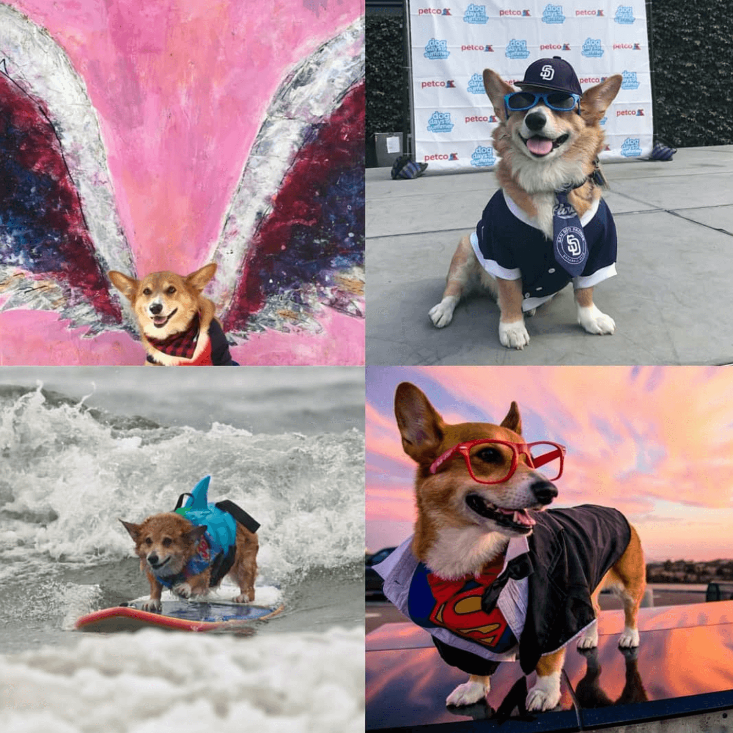 Blog Quartyard Animal M Stak 21 Serving Jojo Actually Competes In Dog Surfing Competitions You May Be Lucky Enough To Spot Him At The Upcoming 13th Annual Surf A Thon Competition Del
